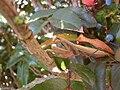Kudlanka-nábožná-Ivaň2008b.jpg