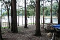 Kundale Reservoir , Munnar - panoramio (3).jpg