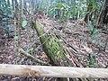 Kuranda QLD 4881, Australia - panoramio (57).jpg