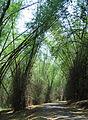 Kuruva Island - Road to Kuruva Island4.jpg