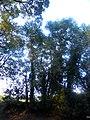 LA VALL DE SANT DANIEL (GIRONA) - panoramio (3).jpg