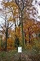 LSG Sudmerberg - Herbstwald (8).jpg