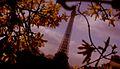 La Tour Eiffel parmi les fleurs (vue du square Ajaccio).jpg