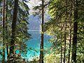 Lago di Tovel - panoramio - MarkusMark (3).jpg