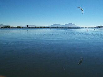 Lake Ewauna - A gull flying over Ewauna Lake