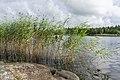 Lake Gisslaren, hiking trail Upplandsleden, Sweden 14.jpg