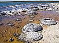 Lake Thetis-Stromatolites-LaRuth.jpg