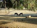Lal Suhanra National Park.jpg