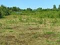 Land near Holywood - geograph.org.uk - 874594.jpg