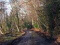 Lane near Cowden, Kent - geograph.org.uk - 1140318.jpg
