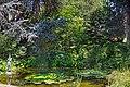 Le jardin botanique de Berne (Suisse) (29851175618).jpg