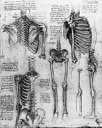 Death - Study of Skeletons, c. 1510, by Leonardo da Vinci