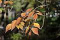 Les feuilles mortes (2953012997).jpg