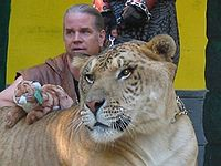 http://upload.wikimedia.org/wikipedia/commons/thumb/0/02/Ligertrainer.jpg/200px-Ligertrainer.jpg