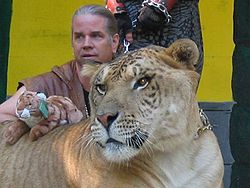 Hercules the liger and his trainer
