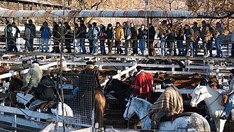 Commodity status of animals - Liniers cattle market, Buenos Aires, Argentina, 2009