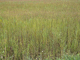 Vlasveld raatakkers Wekeromse Zand