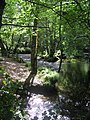 Little Dart River meandering in the woods - August 2011 - panoramio.jpg