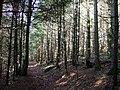 Little Treffgarne Woods - geograph.org.uk - 309043.jpg