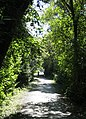 Lochside Trail looking south. READ INFO IN PANORAMIO-COMMENTS - panoramio.jpg