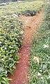 Locusts in kenya.jpg