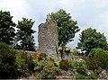 Logan Botanical Garden - geograph.org.uk - 331065.jpg