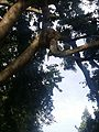 Lord Ganesh Tree.jpg
