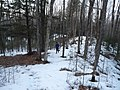 Lost Lake Esker on Ice Age Trail Medford Wisconsin.jpg