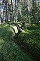 Loukhsky District, Republic of Karelia, Russia - panoramio (3).jpg