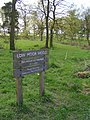 Low Moor Wood - geograph.org.uk - 45165.jpg