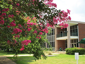Louisiana State University of Alexandria - Crepe myrtle at the southeast corner of the Science Building