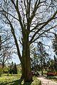 Münster, Park Sentmaring, Naturdenkmal -- 2015 -- 5652.jpg