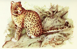 Persian leopard - Portrait by A. N. Komarov.