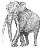 Mammuthus meridionalis reconstruction.jpg