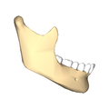 Mandible close-up lateral.png