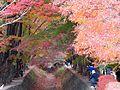 Maple Corridor (16191466966).jpg