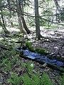 Maple Spring Brook headwaters.jpg