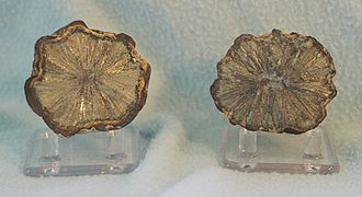 Marcasite - Two halves of a ball of radiating marcasite from France.