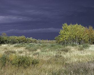 Agassiz National Wildlife Refuge - Marshes and woodlands of Agassiz National Wildlife Refuge