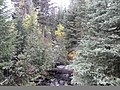 McCully Creek and Forest, Wallowa-Whitman National Forest (26776507306).jpg