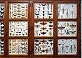 Missiemuseum Steyl-Tegelen, vlinders & geleedpotigen 04.jpg