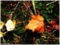 Mist Woods Floor - Flickr - pinemikey.jpg
