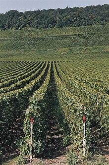 viticulture argentine