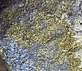 Molybdenite-pyrite closeup Homestake Mine.jpg