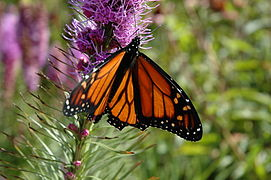 Monarch D70 Test (1316433).jpg