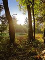 Morning light (6544954467).jpg