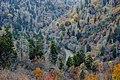 Morton Overlook - panoramio.jpg