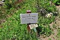 Mount Rainier - Paradise - Dead Horse Creek Trail sign.jpg