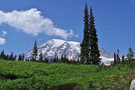 Mount Rainier from Paradise meadow, August 2014 - 03.jpg