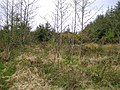 Mountain Common - geograph.org.uk - 407631.jpg